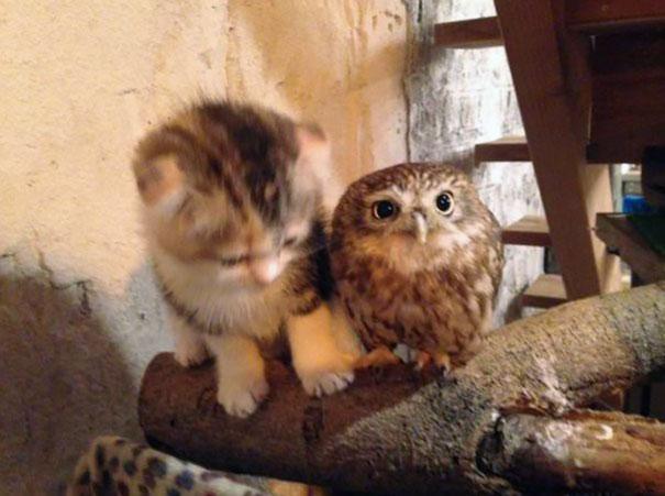 corujinha e gato melhores amigos (3)
