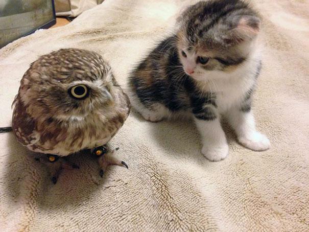 corujinha e gato melhores amigos (4)
