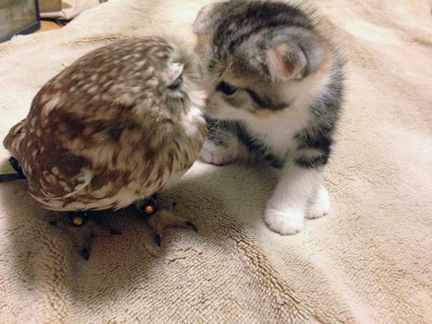 corujinha e gato melhores amigos (5)