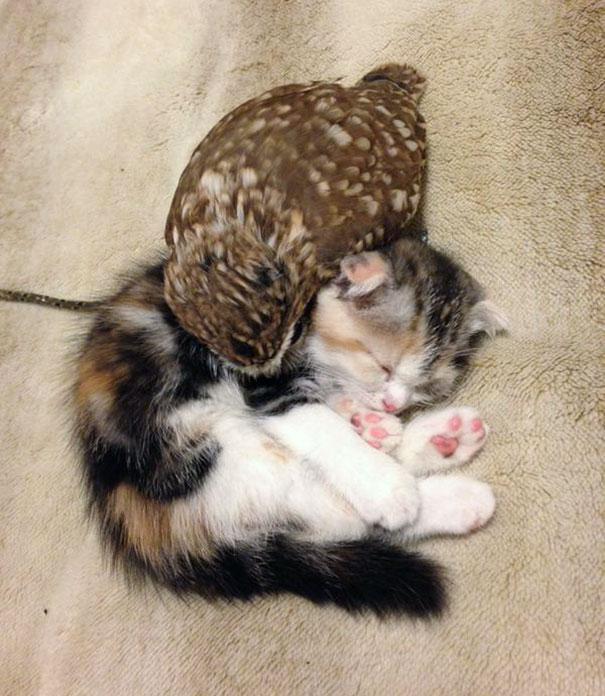 corujinha e gato melhores amigos (6)