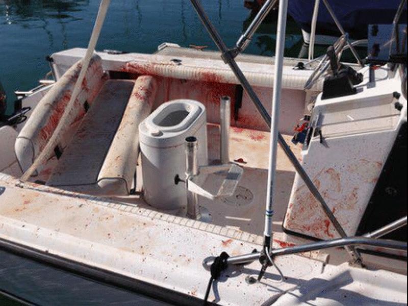 golfinho pula em barco de surpresa e machuca duas pessoas3