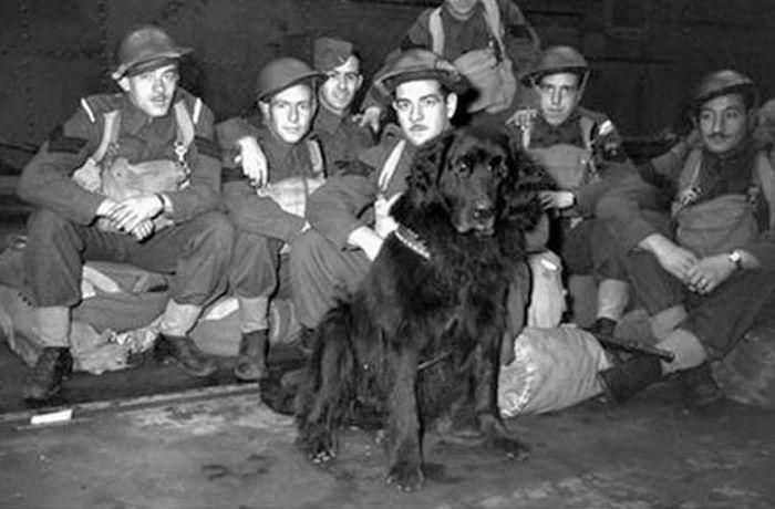 cachorros  que salvaram seus donos 9