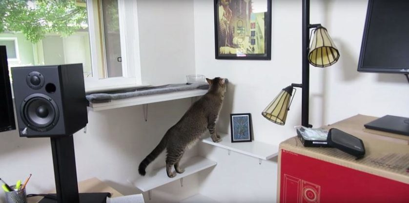 gato maquina de alimentacao (3)