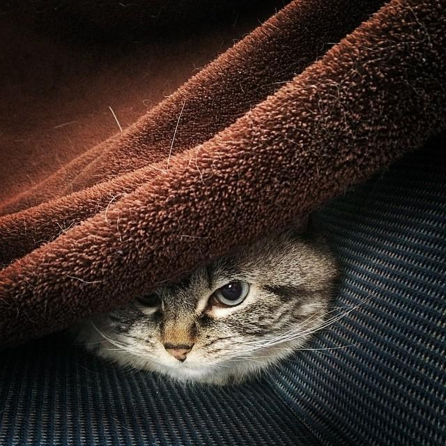 gato vampiro loki (9)
