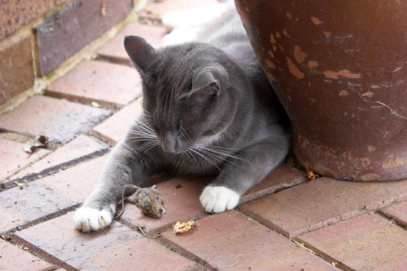gatos trazem para casa animais