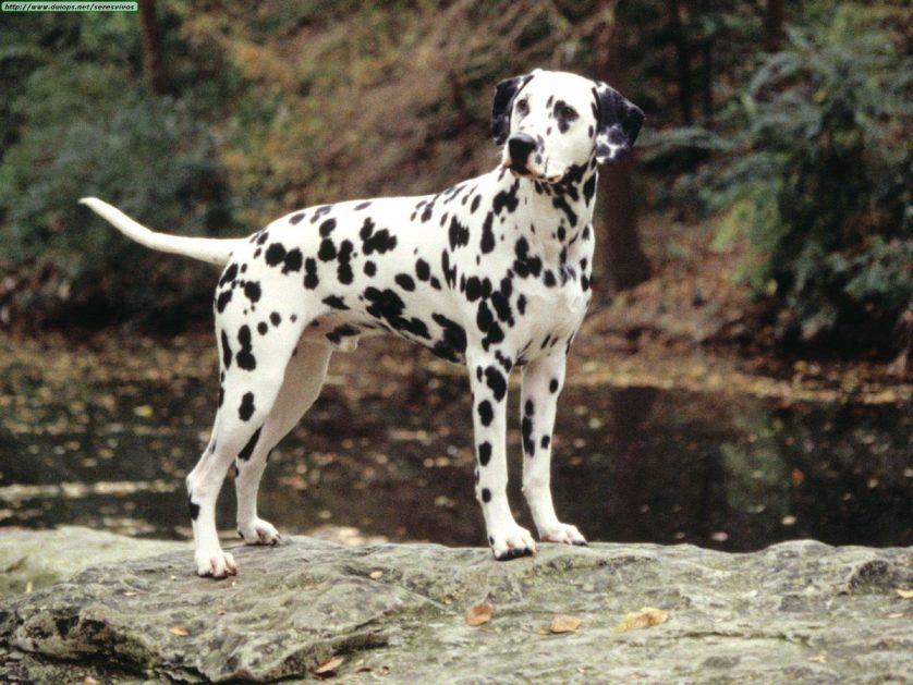 poderes secretos racas de cachorro 4