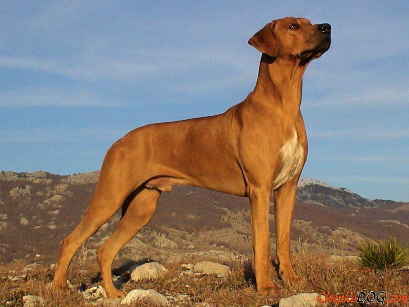 poderes secretos racas de cachorro 6