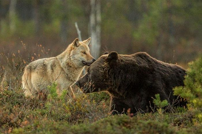 Imagens de amizade urso e lobo melhores amigos (1)