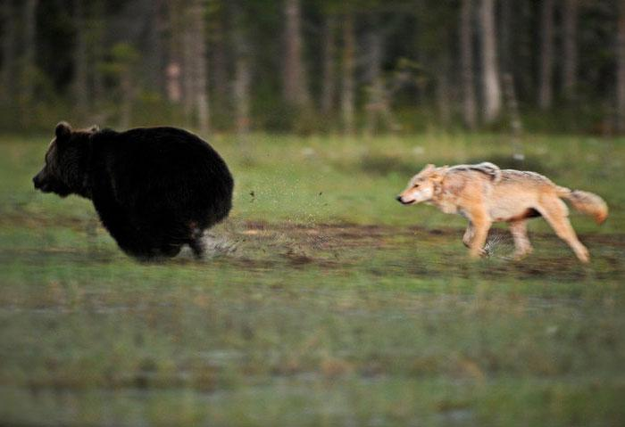 Imagens de amizade urso e lobo melhores amigos (2)