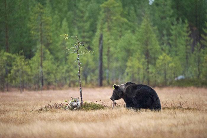 Imagens de amizade urso e lobo melhores amigos (3)