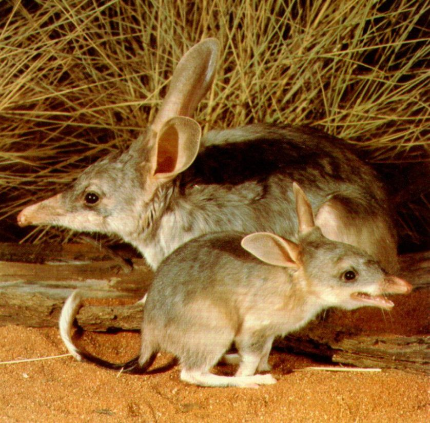 animais da australia 1