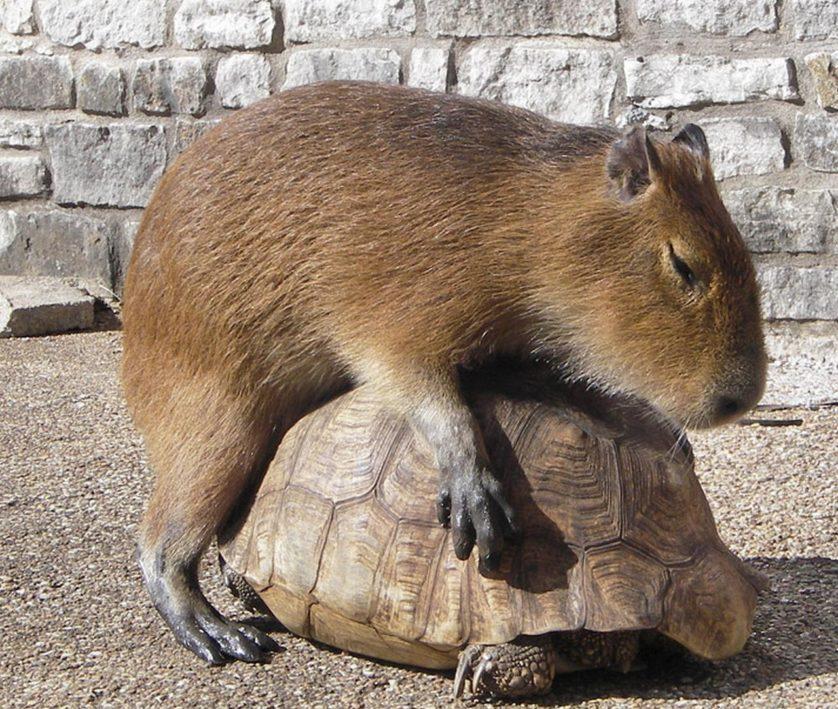 animais pegando carona em outros animais 4