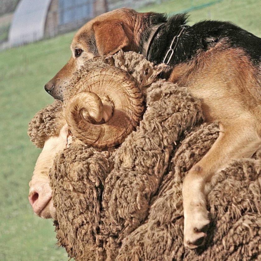 animais pegando carona em outros animais 9