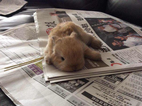 fotos de coelhos