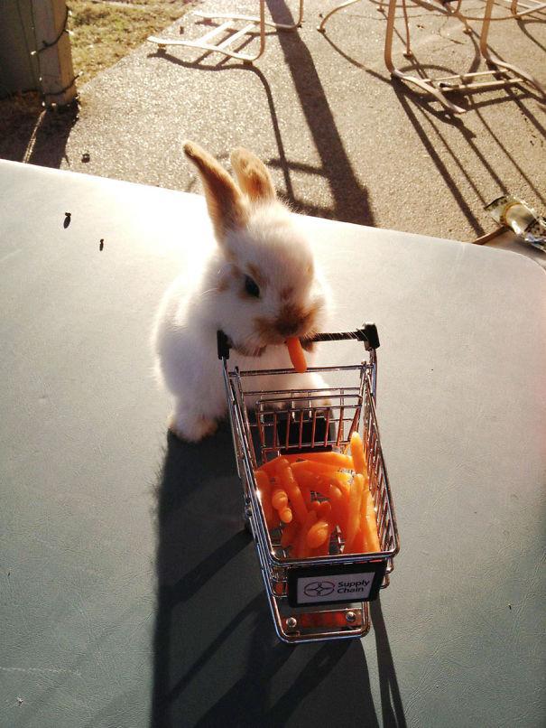 coelhos mais fofos (11)
