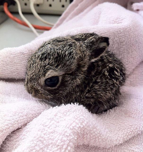 coelhos mais fofos (19)