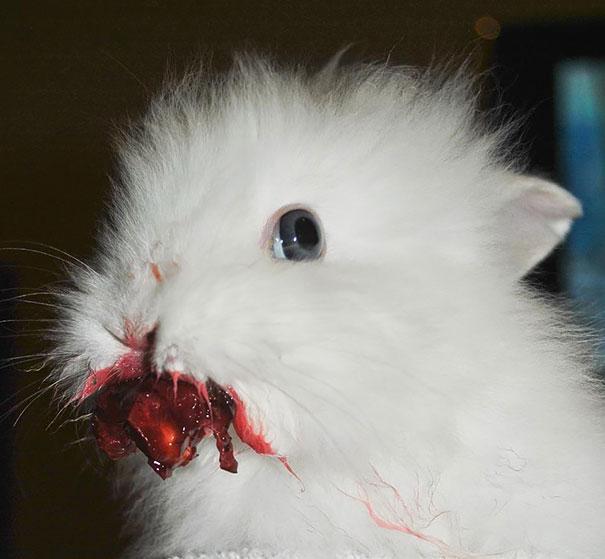 coelhos mais fofos (20)