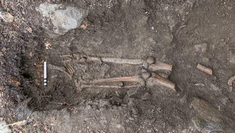 esqueleto medieval arvore irlanda 2