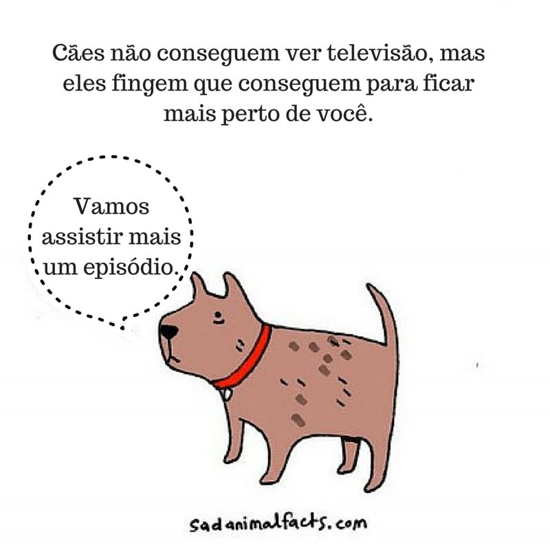 fatos animais cachorros