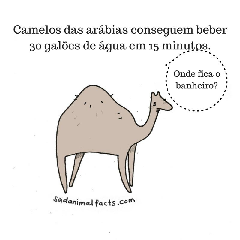 fatos animais camelo