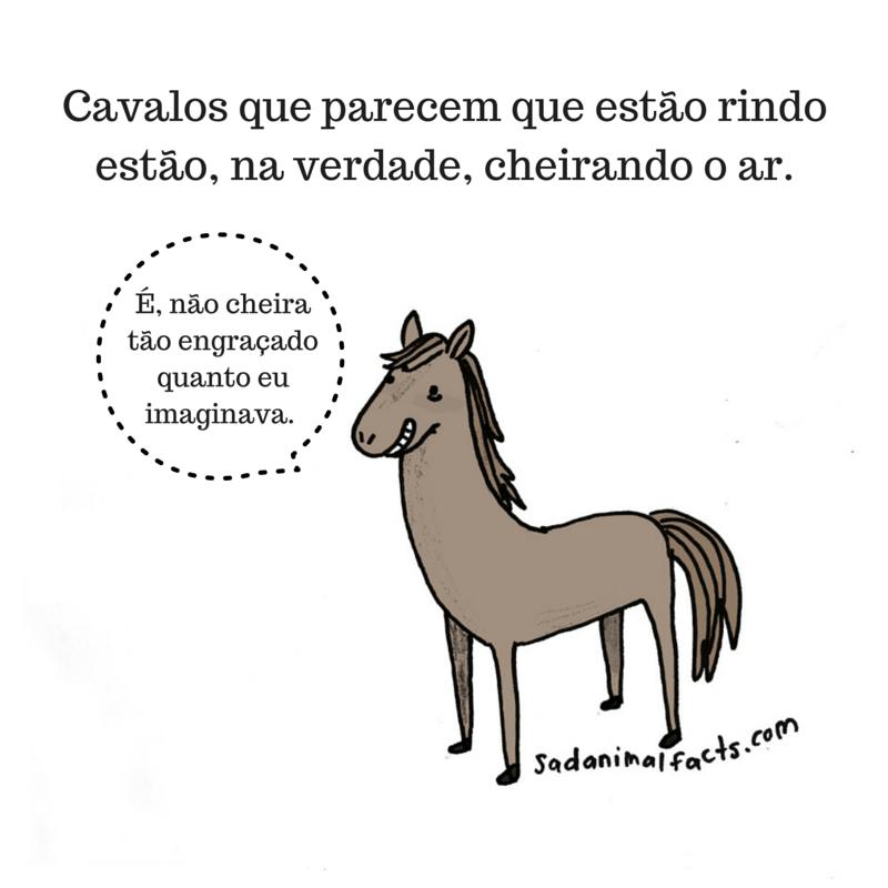 fatos animais cavalo