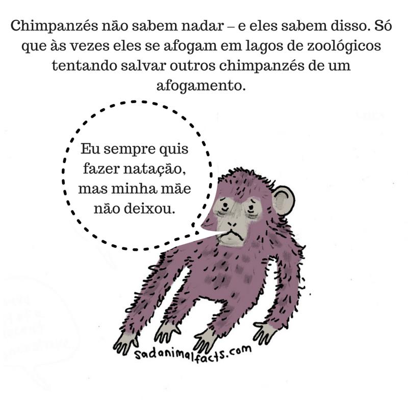 fatos animais chimpanzés