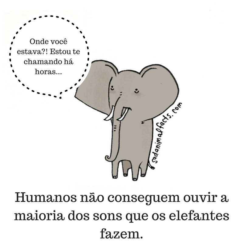 fatos animais elefantes