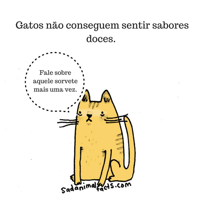 fatos animais gatos