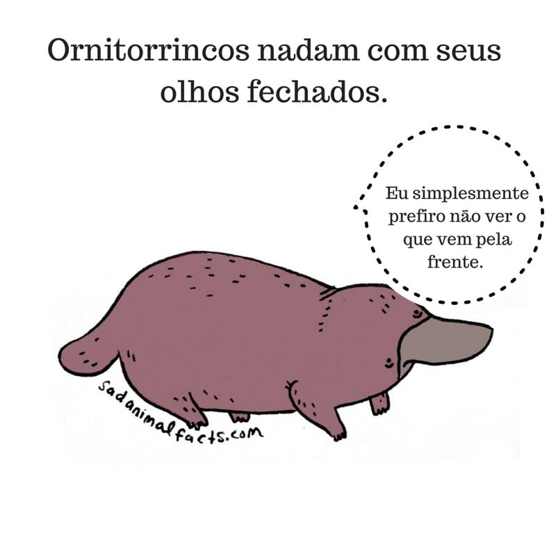 fatos animais ornitorrinco