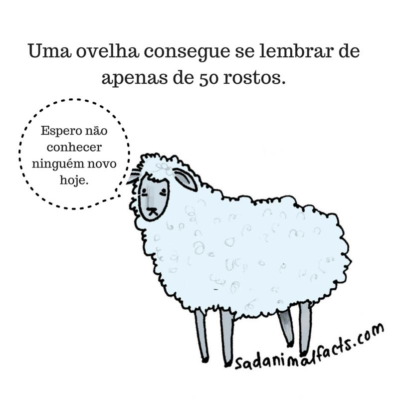 fatos animais ovelhas