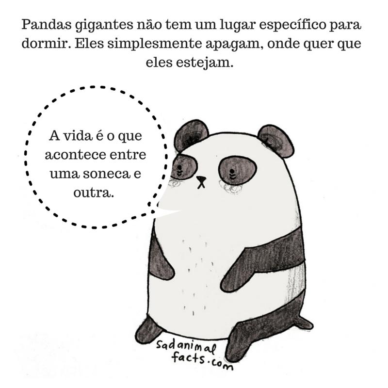 fatos animais panda