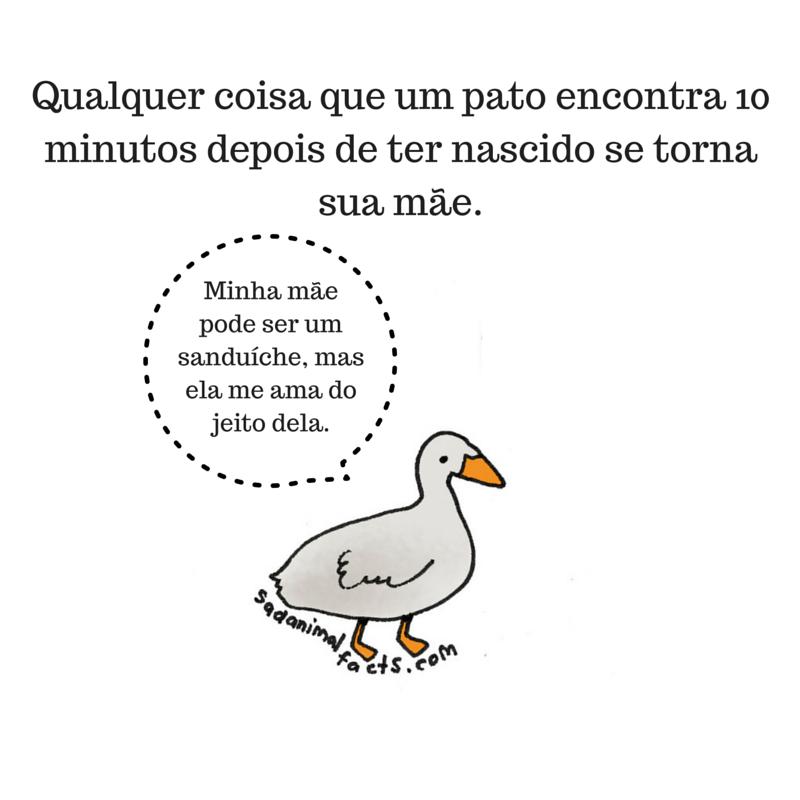 fatos animais patos