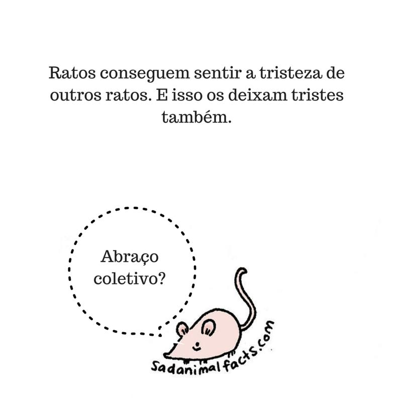 fatos animais ratos