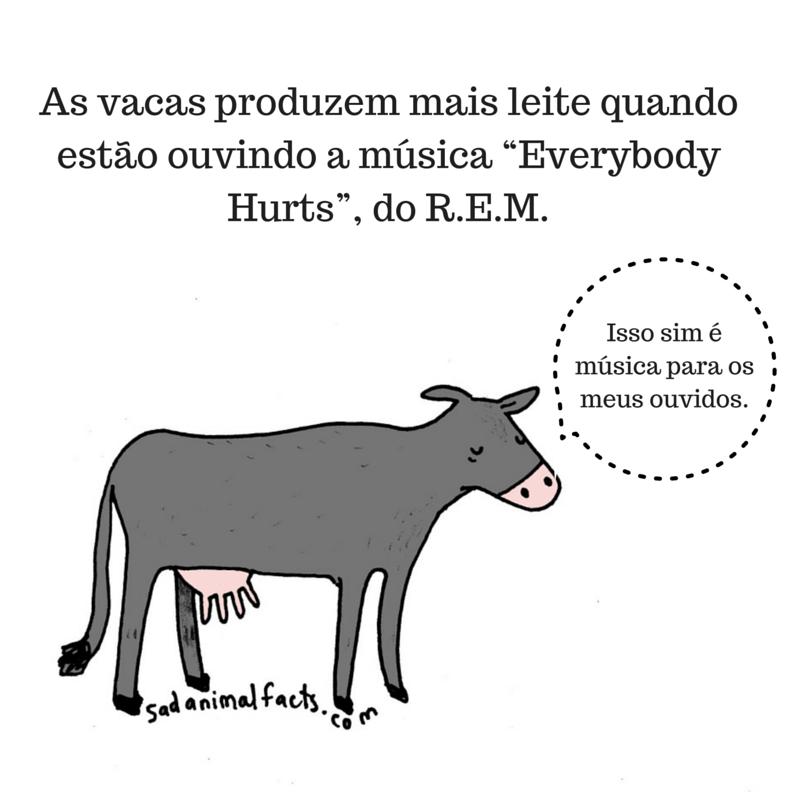 fatos animais vacas
