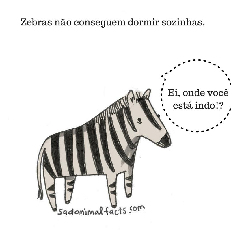 fatos animais zebra