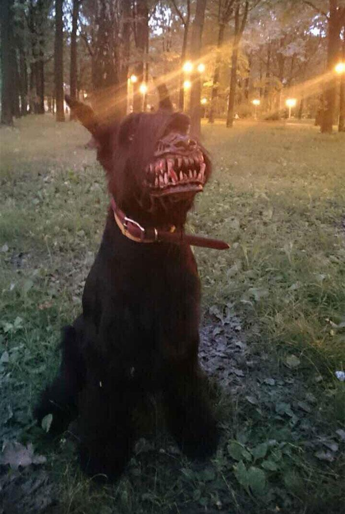 Conheça a nova focinheira assustadora para passear com seu cão