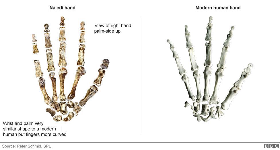 nova especie humana primitiva (1)