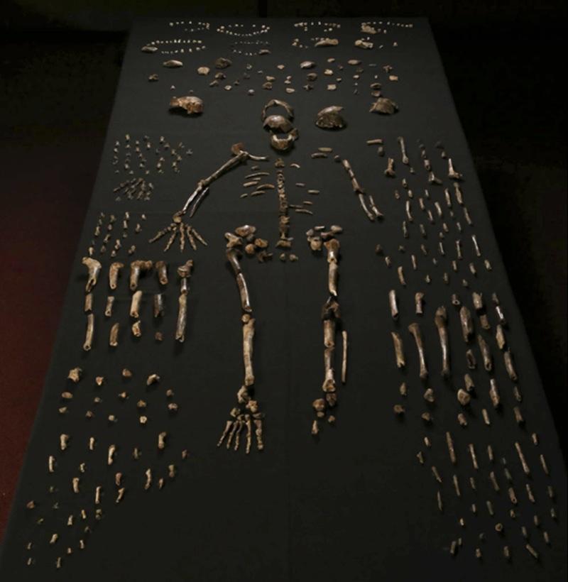nova especie humana primitiva (3)