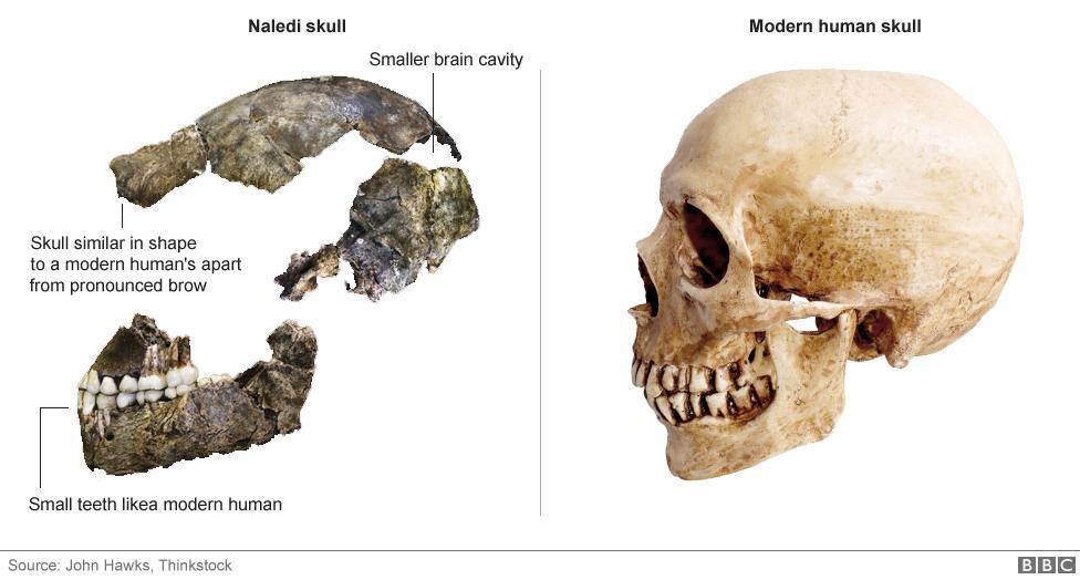 nova especie humana primitiva (4)