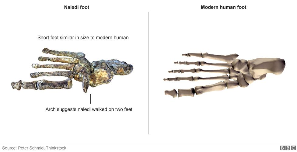 nova especie humana primitiva (5)
