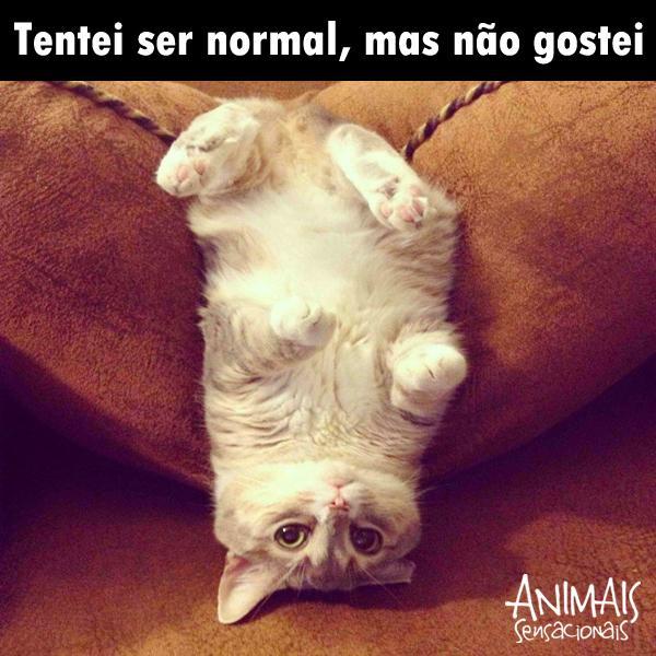ser normal 3