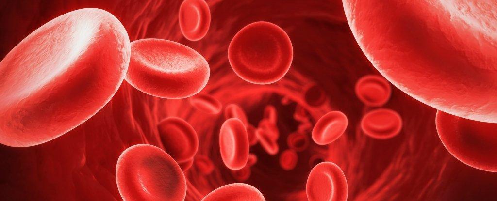 Resultado de imagem para sangue