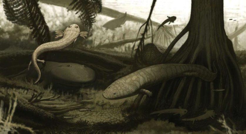 Interpretação artística dos animais descobertos, incluindo o Timonya (o com guelras à esquerda) e o Procuhy (animal nadando através do tronco da árvore na direita)