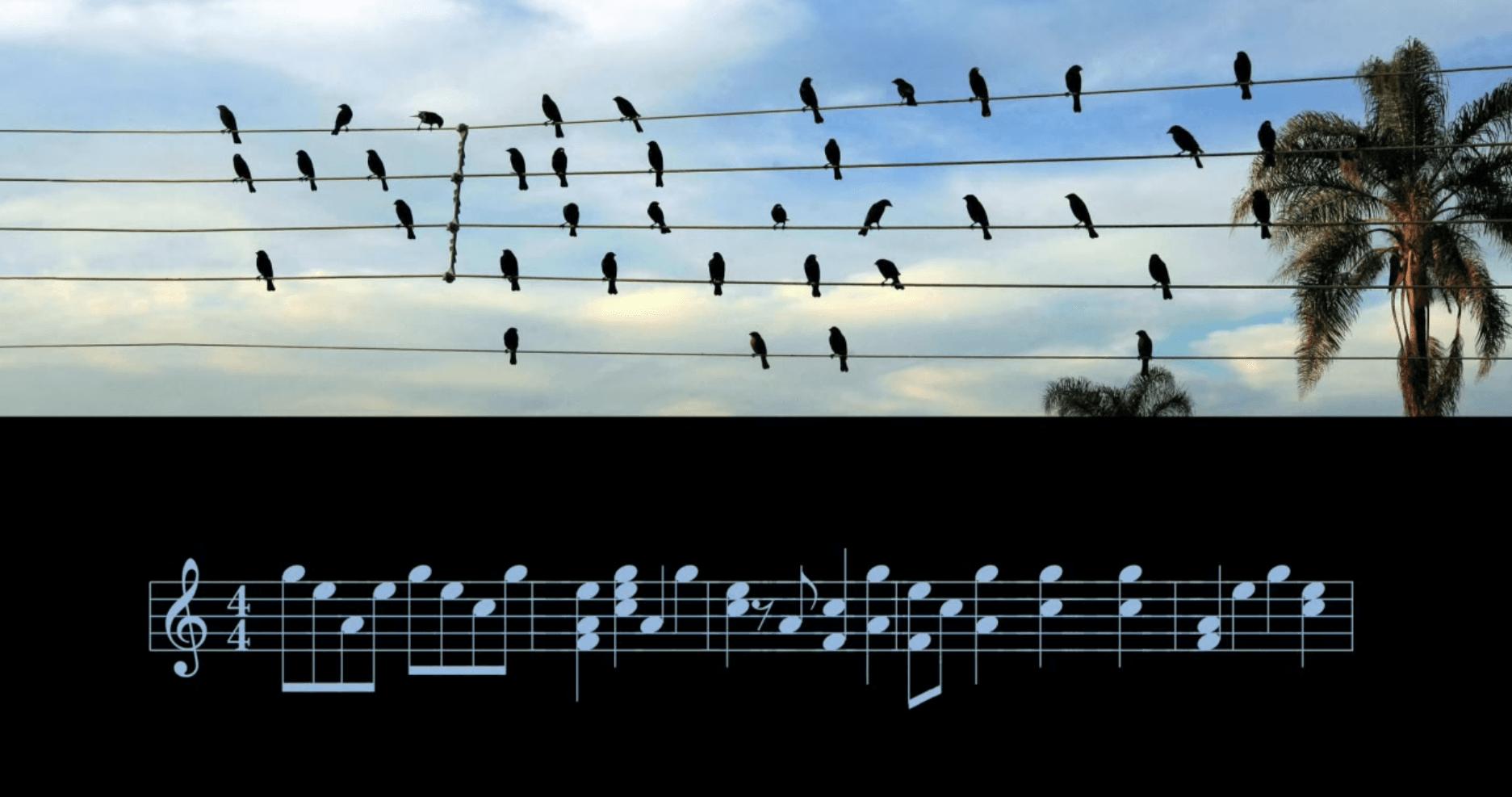 Bela canção é criada a partir de foto de pássaros em fios elétricos