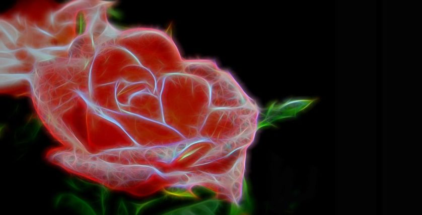 rosa planta eletronica
