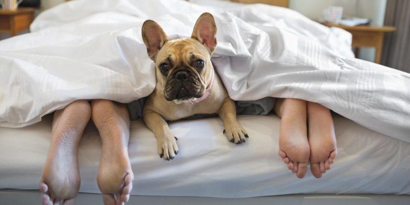 para dormir melhor animais de estimacao dormindo junto