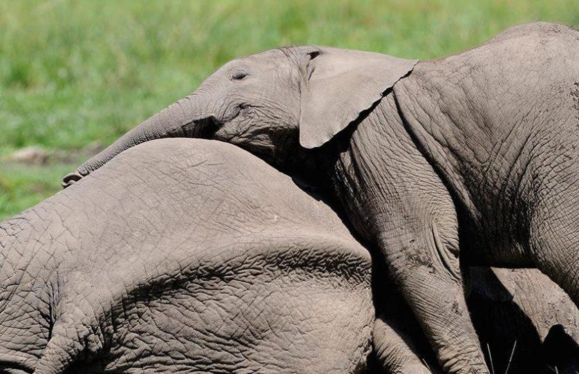 fatos de animais pensamentos 2