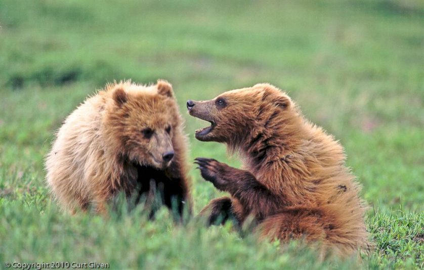 fatos de animais pensamentos 8