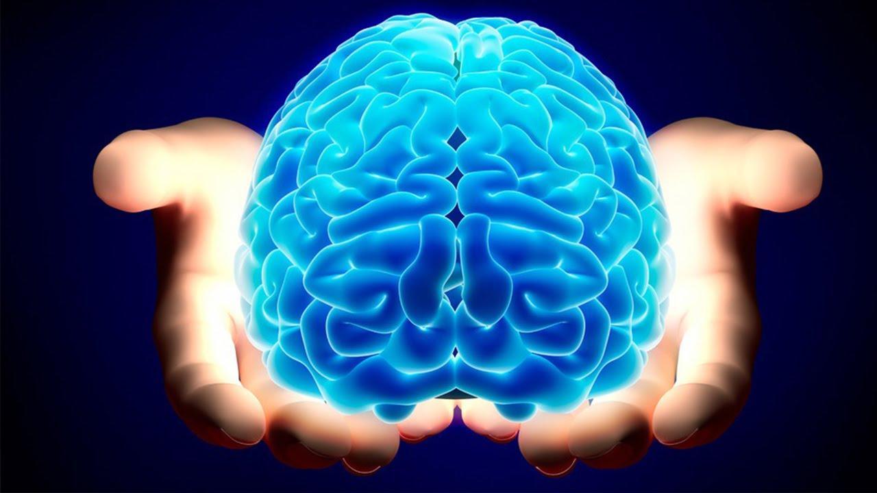 Resultado de imagem para cerebro