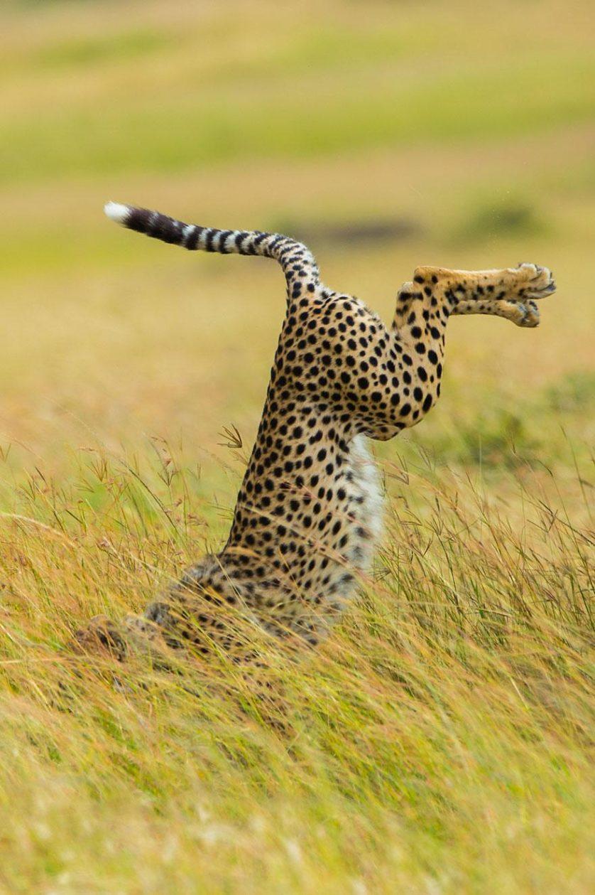 concurso fotos engracadas vida selvagem 12